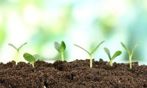 Seed plants Growinf